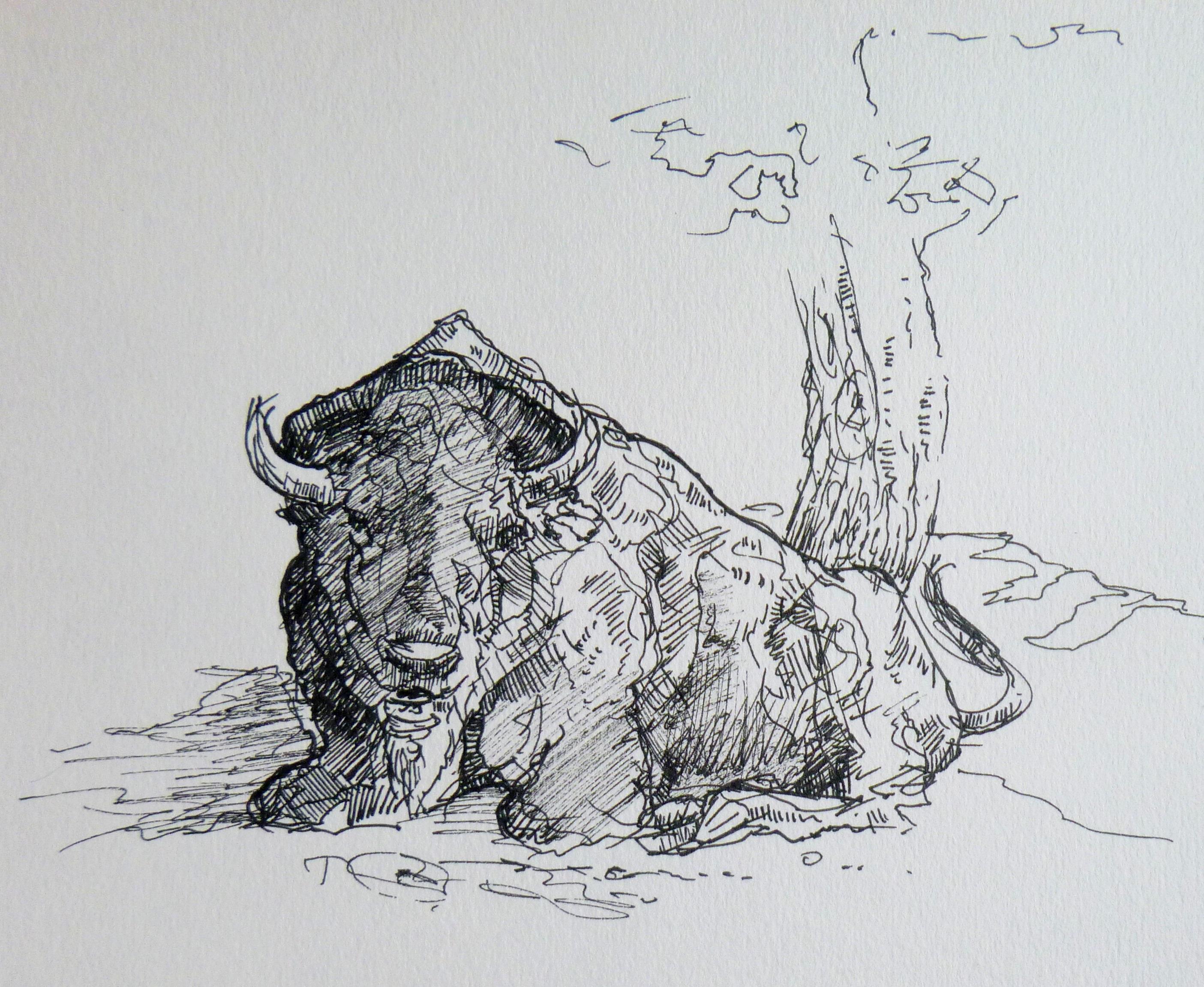 bizon - kresba