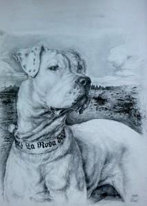 2018, portrét psa, tužka na papíře, 50 x 70 cm